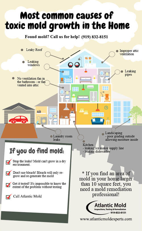 Mold Infographic Raleigh Durham Cary Atlantic Corp