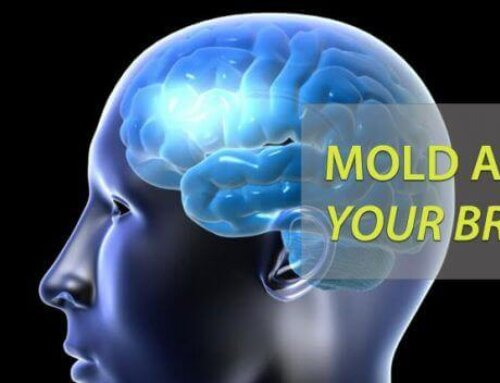 How Mold Impacts The Human Brain